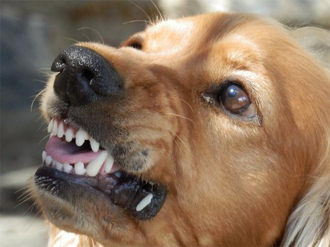 Personal Injury Law – Dog Bites